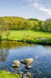 Floden Kent nära Staveley, Cumbria med vaggar i förgrunden och skogsmarken i avståndet Arkivbild