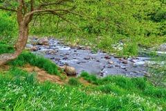 Floden landskap Ek och vita blommor vid vattens kant royaltyfri fotografi