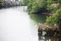 Floden med rotar Fotografering för Bildbyråer