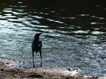 Floden och en fågel Arkivbilder