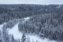 Floden och skogen från en höjd Arkivbilder