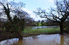 Floden Ouse brast dess banker. royaltyfria bilder