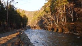 Floden på härlig lanshavte between sörjer och björkar i skogen på solnedgången ultrarapid 1920x1080, full hd arkivfilmer