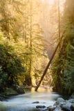 Floden på Lynn Canyon i norr Vancouver arkivbild