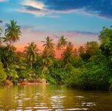 Floden, soluppgång och tropiskt gömma i handflatan royaltyfri foto