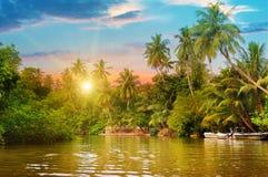 Floden, soluppgång och tropiskt gömma i handflatan royaltyfria foton