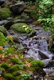 Floden som över flödar, vaggar i de mossa fyllda gröna nedgångträna royaltyfria bilder