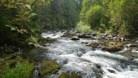 Floden vaggar Arkivfoto