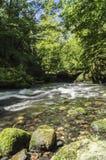 Floden vaggar skogar Fotografering för Bildbyråer
