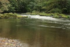 Floden varslar - lugnt vatten med forsar i bakgrund Royaltyfri Bild