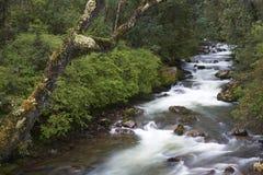Floder av Patagonia Arkivbilder