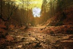 Floder för Carpathian berg Royaltyfri Fotografi