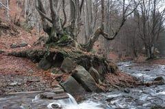 Floder för Carpathian berg Arkivfoton