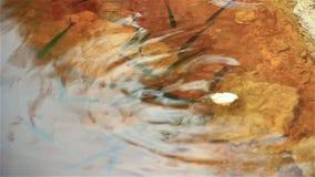 Flodfisk i vattnet, matningar på bröd lager videofilmer