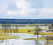 flodfjäder Fotografering för Bildbyråer