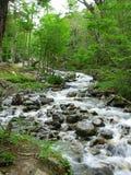 Flodflöde i skogen Arkivbild