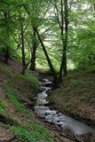 Flodflöde i vårberglandskap Arkivfoto
