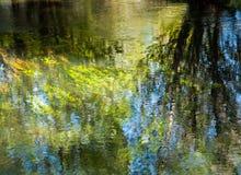 Flodgräs- och trädreflexion Arkivfoto