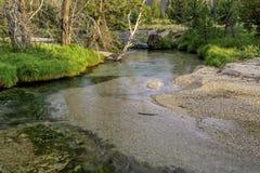 Flodgrus och ström med träd och gräs Royaltyfri Foto