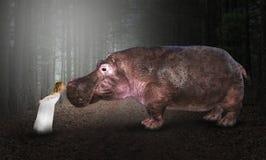 Flodhäst Hippopotomus, natur, djurliv, flicka royaltyfri bild