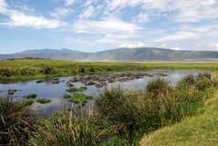 Flodhäst sjö Arkivbild