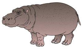 Flodhästamphibius eller flodhäst Arkivfoton