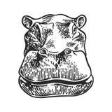 Flodhästar head teckningsgravyr, tappningvektorillustration Arkivbilder