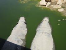 Flodhästar i vattnet Royaltyfri Foto