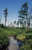 Flodkällfloder Arkivbild