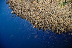 Flodkust med flodstenar Royaltyfri Foto