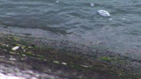 Flodkustlinje vattenkanal arkivfilmer