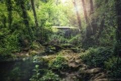 Flodlandskap till och med inre djungelområde Arkivbild