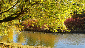 Flodliggande Royaltyfria Foton