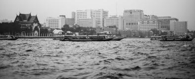 Flodliv Arkivbilder