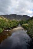 Flodmandel i den Sma dalgången, Perthshire, Skottland Royaltyfri Fotografi