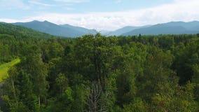Flodmun för flyg- sikt som flödar till låga nivån för vildmarkbergsjö - för för bergsjö och flod för flyg- sikt skog för mun arkivfilmer