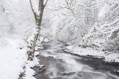 Flodokement i vinter royaltyfria foton