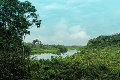 Flodplats i amazonÃaen av Ecuador royaltyfri bild