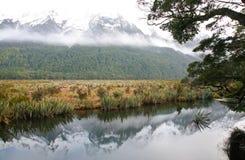 Flodplats i Fiordland Arkivfoto