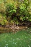 Flodplats i naturen Arkivfoto