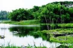 Flodplats med bambuskogen Royaltyfria Foton