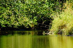 Flodreflexion Fotografering för Bildbyråer