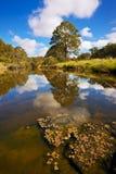Flodreflexioner Royaltyfri Bild