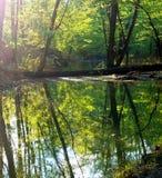 Flodreflexioner Arkivfoto