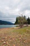 Flodsäng med träd och berg Royaltyfri Bild