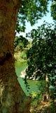 Flodsikt bak trädmaterielfotoet royaltyfri foto