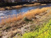 Flodsikt på Kawazu i vinter royaltyfria bilder