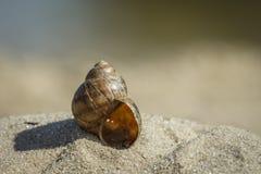 Flodskal på den sandiga kusten Royaltyfri Foto