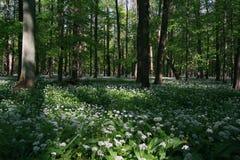 flodskogplain Arkivbild