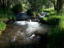 Flodspring under sommar Arkivbild